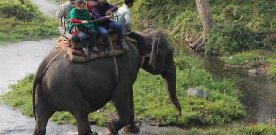 elephant-ride-in-jaldapara